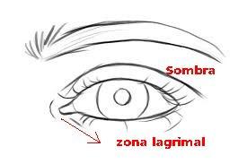 zonas del ojo